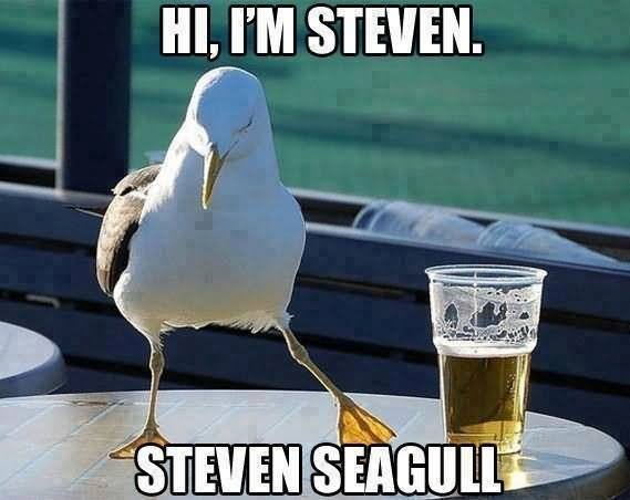 Hi-I-Am-Steven-Funny-Bird-Meme-Picture